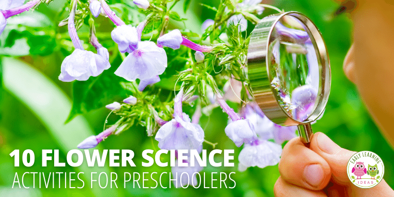 Your preschoolers will love learning about flowers with these fun, hands-on, engaging flower science activities. Perfect for your flower theme, garden theme or spring theme unit, and lesson plans in your preschool or pre-k classroom & science center. Much more than a color-changing flower experiment! Your kids will study flowers through a scientific investigation, learn the life cycle of flowers, the parts of a plant, the parts of a flower, and will learn about and plant seeds