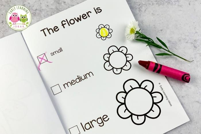 flower science investigation - record the size of a flower