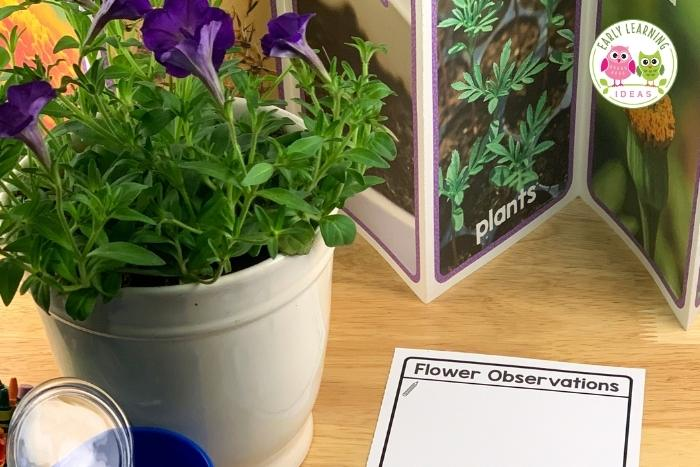 flowering plant observation and life cycle study