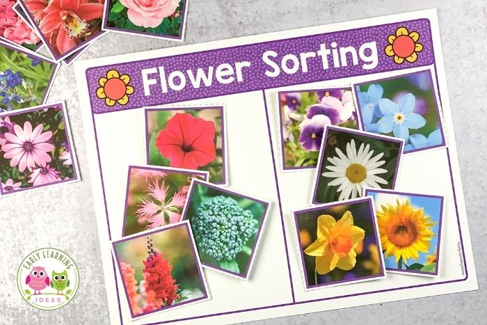 flower picture sorting activity