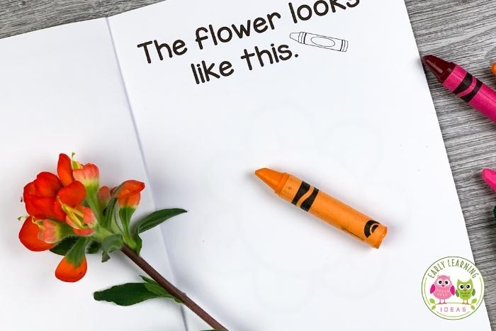 flower investigation, - record the appearance of a flower
