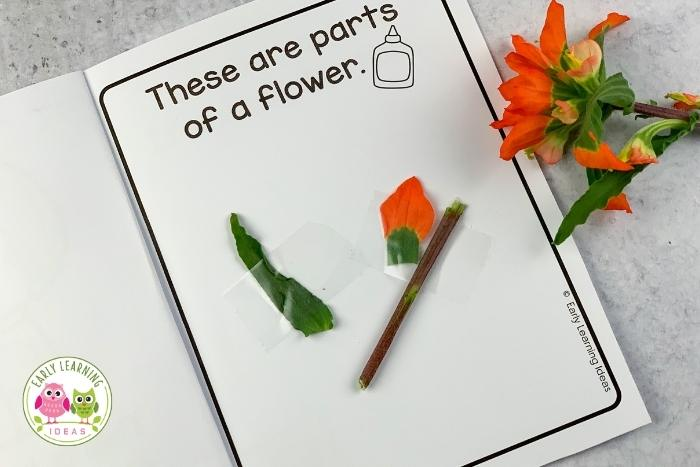 flower science investigation - the parts of a flower