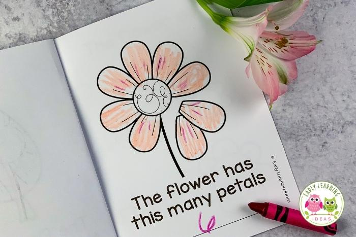 flower science investigation - how many petals does a flower have?