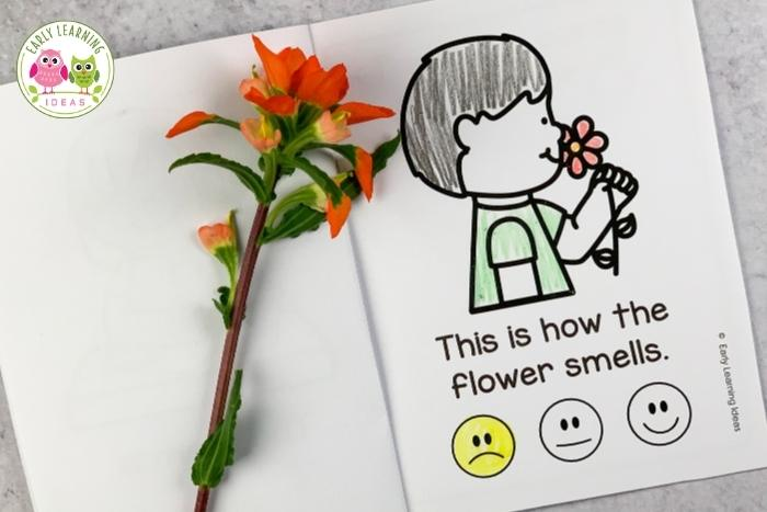 flower science investigation -Use your sense of smell to smell the flower