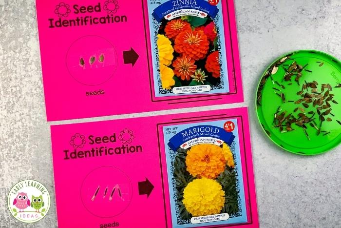 Flower seed identification and sorting activity