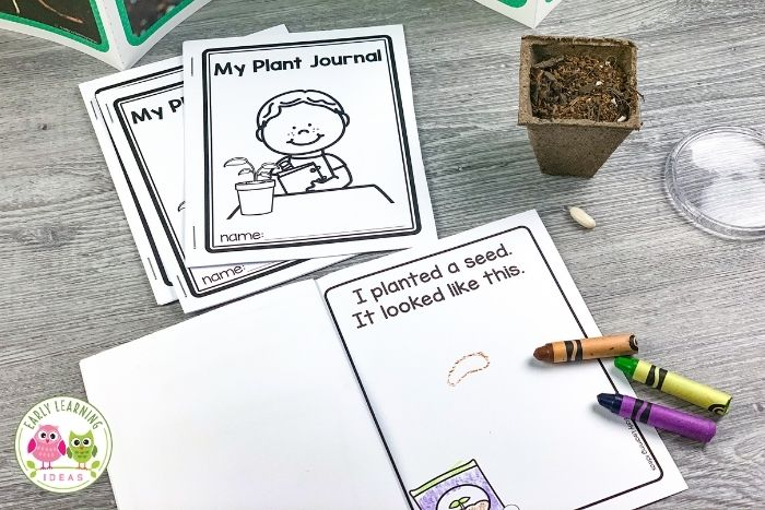 plant a seed and record what it looks like in a plant journal
