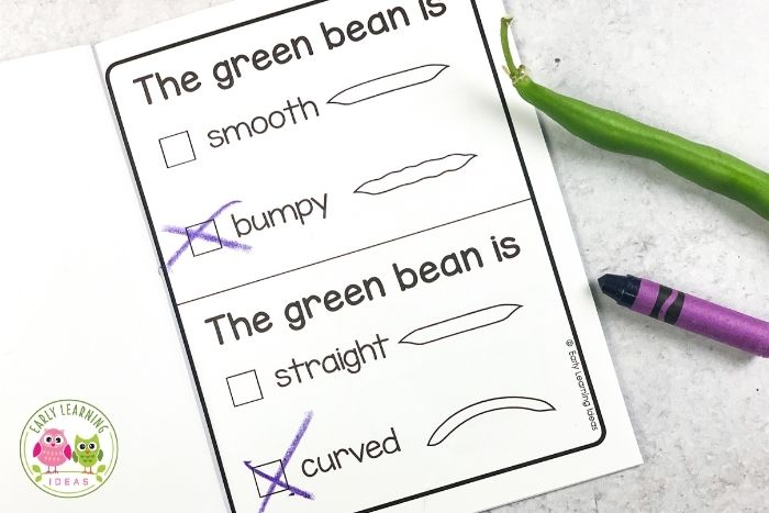record the shape and texture of a green bean