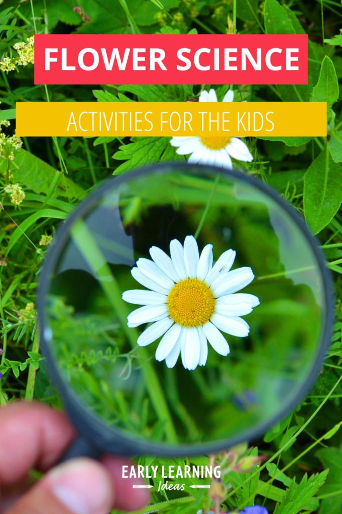 flower science activities for preschool