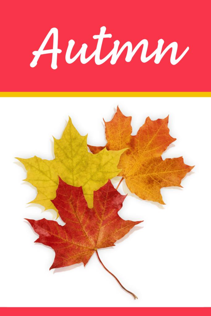 fall and autumn theme