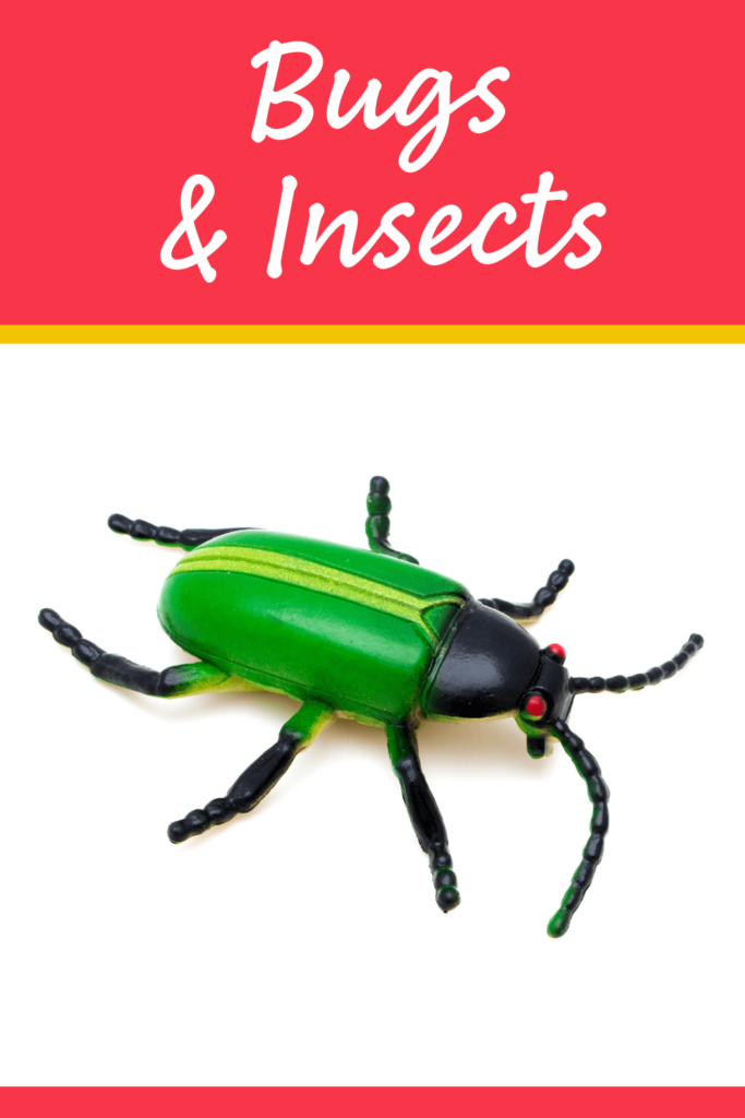 bug and insect theme