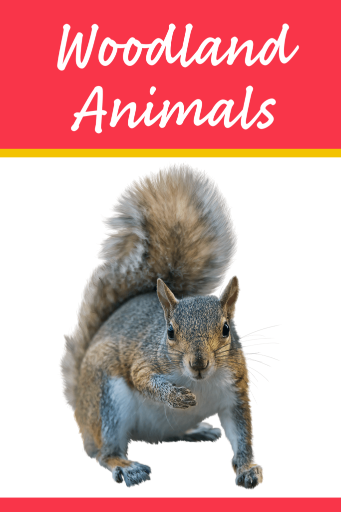 squirrel and woodland animal theme