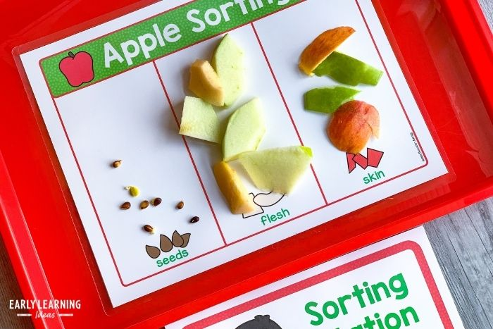sorting apple parts for an apple science investigation