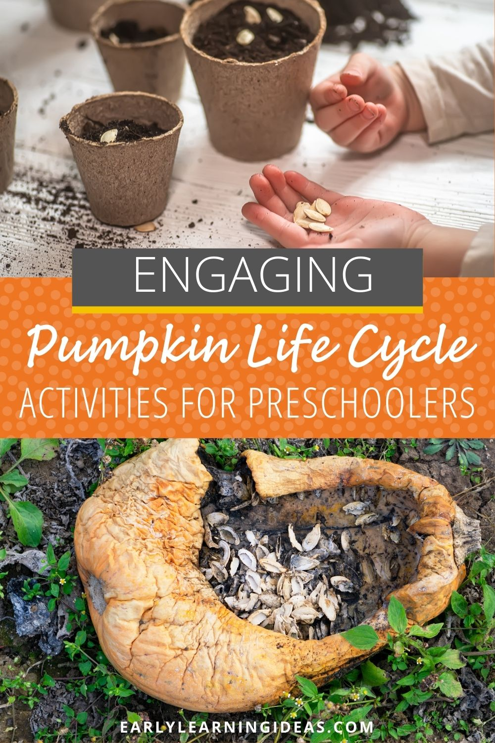 Pumpkin Life Cycle Activities for young kids