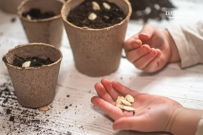 kids can plant pumpkin seeds to learn about the pumpkin life-cycle