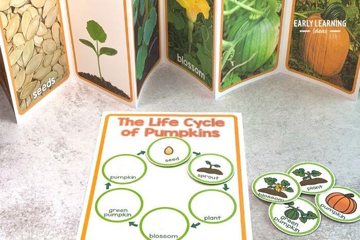 pumpkin life cycle printable activity and pumpkin life cycle book