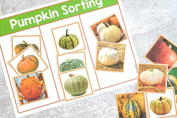 printable Pumpkin science sorting and classifying activity
