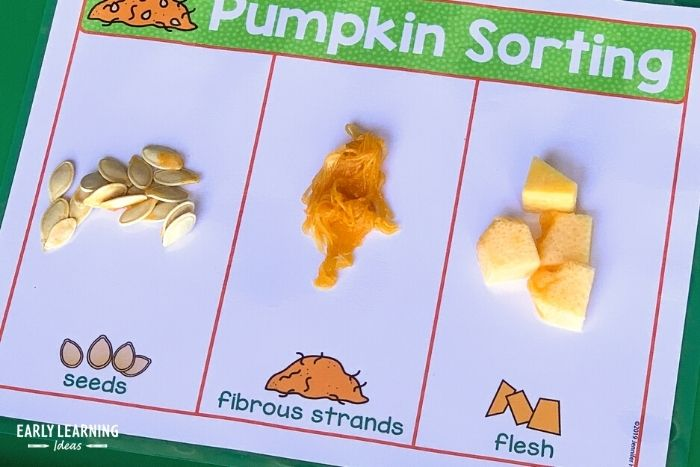 pumpkin science sorting activity.   Kids can sort seeds, pulp, and flesh.
