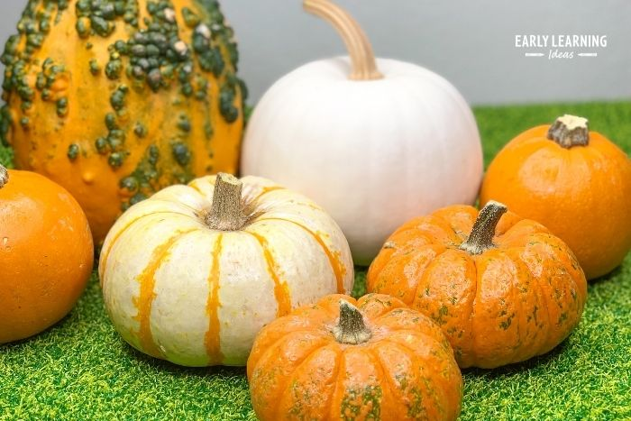 kids can  study the outside appearance of different types of pumpkins to learn that there are many different colors, shapes, sizes, and textures of pumpkins.