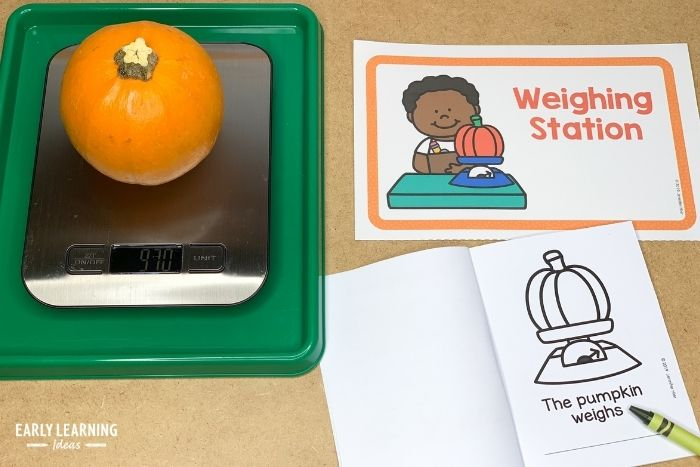 Scientists gather data about objects.  Kids can weigh their pumpkin and record the number in their pumpkin investigation book.