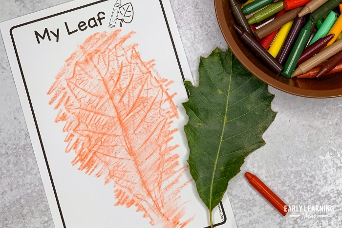 a picture of a leaf rubbing