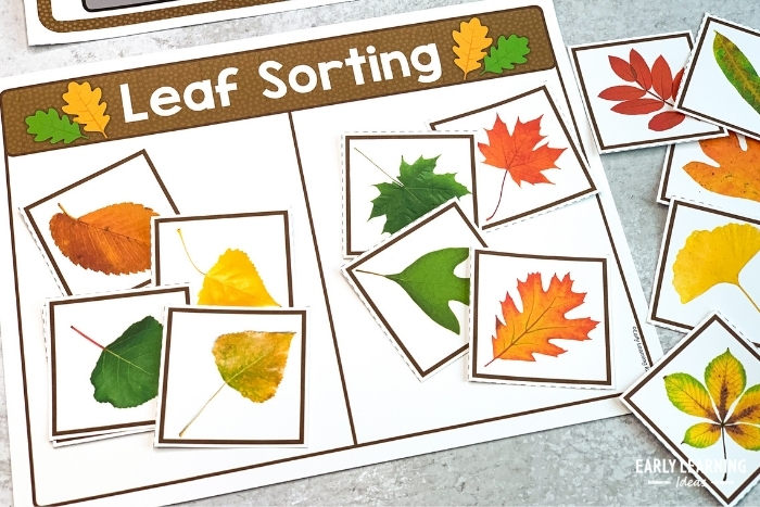 sorting pictures of leaves on a sorting mat