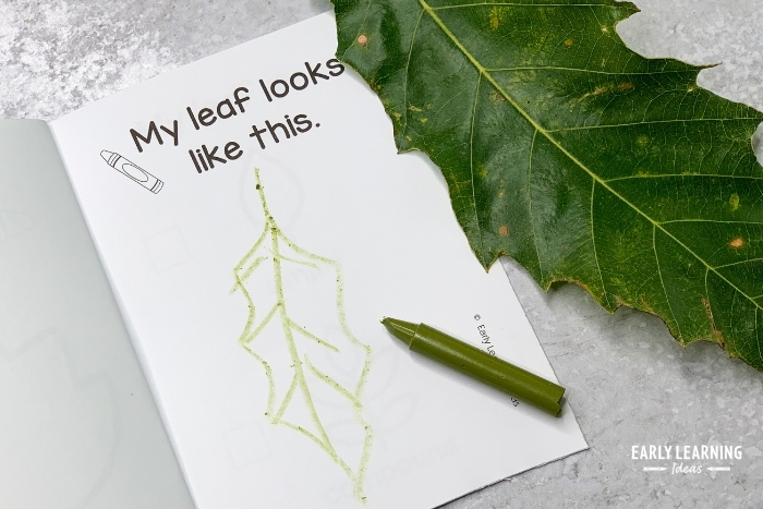 Kids can draw the leaf