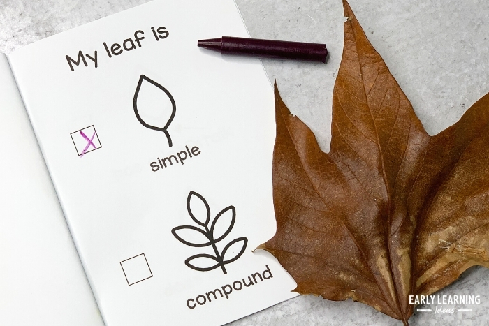 Leaf investigation book - on this page kids identify the leaf as simple or compound
