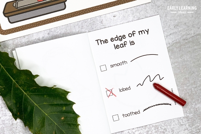 Kids identify the edge of the leaf on this page of the leaf investigation book.  Is the edge smooth, toothed, or lobed?
